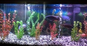 Freshwater Aquarium Services Saltwater Aquarium Services